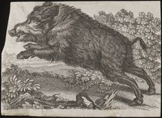 Print of a Wild Boar, 18th century  The Victoria & Albert Museum  For my darling and his obsession fascination with hunting wild boars.  Because it's difficult to hunt boars in England, he has an open invitation to come here to Florida and hunt feral hogs.