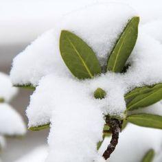 Brauchen Pflanzen Schutz gegen erneute Kälte? » Heimische-Wildpflanzen.de - Das Blog