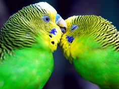 love birds. parrots mate for life :)