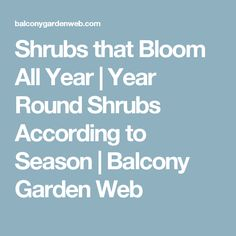 Shrubs that Bloom All Year | Year Round Shrubs According to Season | Balcony Garden Web