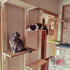 壁/天井/キャットタワーDIY/キャットウォーク/ねこのいる日常/芝生調シート/NO GREEN NO LIFE...などのインテリア実例 - 2018-03-22 13:09:07 | RoomClip (ルームクリップ) Diy Cat Shelves, Cat Life, Entryway, Tower, Furniture, Home Decor, Cat Room, Quartos, Spaces