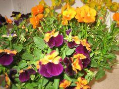 Edible Plants from Farmer Jay Pure Organics http://www.myfarmerjay.com
