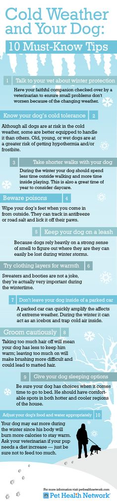 Cold weather tips for dogs. Will be good to have this soon - our dogs won't know what hit them going from NZ to Canada!