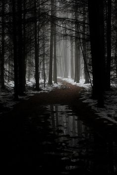 ideas for photography landscape black and white mists Dark Photography, Winter Photography, Black And White Photography, Amazing Photography, Landscape Photography, Beauty Photography, Photography Ideas, Photography Couples, Animal Photography