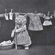 Vintage cat photo...book I remember?