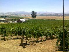 Vineyards at Darcie Kent