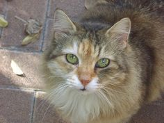 Being A Great Care Giver: Cat Tips - http://petcarecheap.com/being-a-great-care-giver-cat-tips/