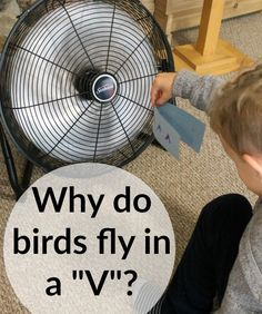 """A great science experiment for kids! Why do birds migrate in the shape of a """"v""""? A great lesson on wind resistance!"""