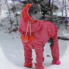 Shop for Canadian custom designed dog clothing for the standard poodle and other large breeds, including raincoats, cooling coats, protectivewear and Doggy Stuff, Snow Suit, Poodles, Goldendoodle, Pet Products, Dinosaur Stuffed Animal, Suits, Pictures, Dogs
