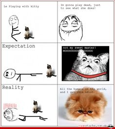 If you had cats as a child and claimed you didn't do this, you are a liar.