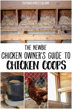 The Newbie Chicken Owner's Guide to Chicken Coops