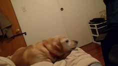 He has the most vocal frustrated tantrums... https://youtu.be/EDOX5ujkBi4