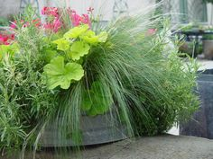 grassy-container-planting.jpg