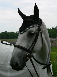 we've been loving the Fly Bonnets on the horses in the Olympic Equestrian events - here's a Black with triple crystals II