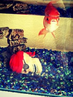 Cosmo's Nat Wall sent us a pic of Iain the goldfish.