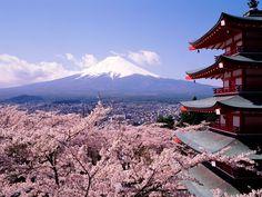 Mont Fuji cerisiers en fleurs - Japon