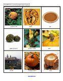Pumpkin Theme for preschool and kindergarten
