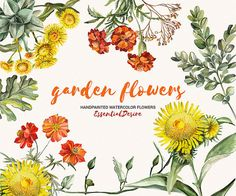Watercolor Garden Flower Digital ClipArt by EssentialDesire