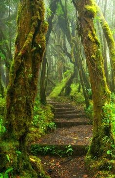 Hoh Rain Forest Trail at Olympic National Park ~ Washington State.