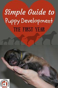 Understanding the development & milestones of a puppy's first year via @KaufmannsPuppy