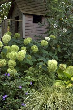 Garden Shrubs Greenery For Cutting And Arranging