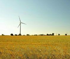 Pale eoliche su campo di grano.