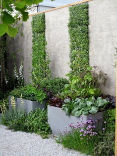 Vertical foliage in concrete wall