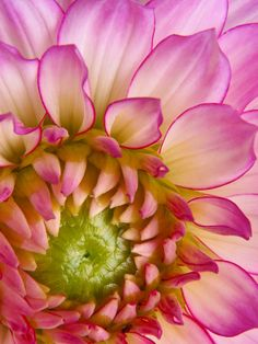~~Pink Dahlia by David and Carol Kelly~~
