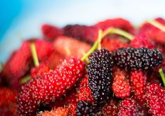 Mulberries contain alkaloids that activate macrophages. Macrophages are white blood cells that stimulate the immune system, putting it on high active alert against health threats. Honey Container, Mead Recipe, Yeast Starter, Meyer Lemon Tree, Mulberry Leaf, Blueberry Bushes, Eating Raw, Great Recipes, Food To Make