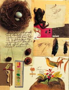 """Melissa Sweet's illustrated collage for the book """"The Boy Who Drew Birds: A Story of John James Audubon"""" by Jacqueline Davis"""