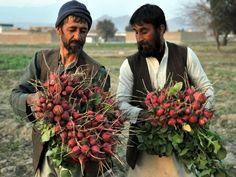 Vegetable farmers on the outskirts of Jalalabad. The economy of Afghanistan is poor and stable due to lack of proper industrialization. There is a lack of well-developed infrastructure and manufacturing facilities and there is great dependence on foreign aid and assistance. There is much potential though. Afghans pride themselves on the bounty of their beautiful land.
