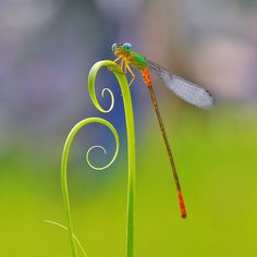 Now that's a close up of a dragon fly