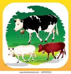 Illustration of types of cows