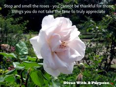 Creating Gratitude: Shaping Your Perspective - Divas With A Purpose
