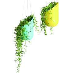 Simple, classic hanging plants