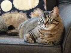 Lost Cat - Tabby - Uxbridge, ON, Canada L9P 1L1