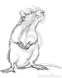 Bildergebnis für zeichnung ratte