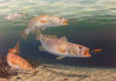 Chasing the Dream fish paintings