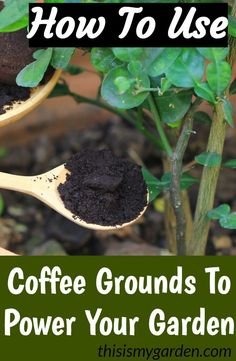 Using Coffee Grounds To Power Your Garden Flowers Plants And More! How To Power Your Garden Flowerbeds and Perennials With Coffee Grounds. The post Using Coffee Grounds To Power Your Garden Flowers Plants And More! appeared first on Garten. Unique Garden, Cute Garden Ideas, Garden Yard Ideas, Flower Beds, Flower Tree, Flower Bed Decor, Garden Compost, Garden Soil, Compost Tea