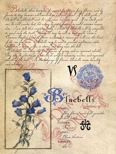 BlueBells-page (a_granger) Tags: