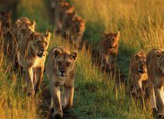The Eyasi Camping (Standard Camping) Tarangire-Manyara-Lake Eyasi-Serengeti-Ngorongoro10 nights 11 days Africa safari