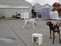Examen. Het bruine hondje komt ook bij Koningen vandaan. Daar heette ze Margriet nu Amber.