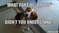 don't you speak #beagle?