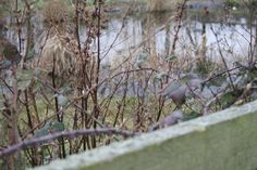 This is a photo of the pond behind a bunch of thorns. Pond, My Photos, Photography, Animals, Water Pond, Photograph, Animales, Animaux, Fotografie