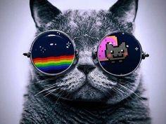 Cannot. resist. Nyan.