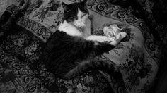 Мур #cat