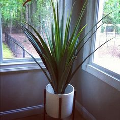 My New (fake) Plant! My Brown Thumb Sighs With.