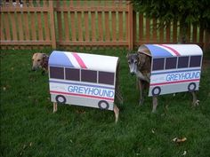 Greyhounds in Greyhound Bus Costumes!