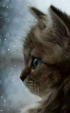 Kitten watching rain by Benjamin Torode