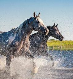 Splashing through the water